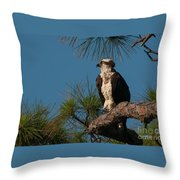 Osprey In Pine 2 Throw Pillow