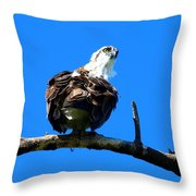 Osprey On A Branch Throw Pillow