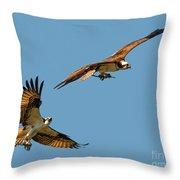 Osprey Pair Throw Pillow