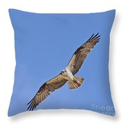 Osprey Pandion Haliaetus In Flight Throw Pillow