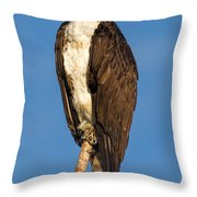 Osprey Perched In Yellowstone National Park Throw Pillow