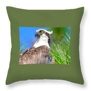 Osprey Profile Throw Pillow