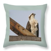 Osprey -seahawk Throw Pillow