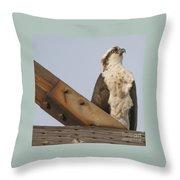 Osprey -seahawk Throw Pillow