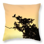 Osprey Sunset Throw Pillow