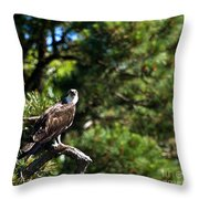 Osprey Talk Throw Pillow