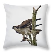 Osprey With Fish 3 Throw Pillow