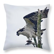 Osprey With Fish 4 Throw Pillow