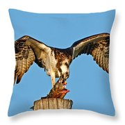 Osprey With Spotted Bass Throw Pillow