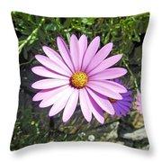Osteospermum - African Daisy - Pink Throw Pillow