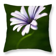 Osteospermum Daisy Throw Pillow