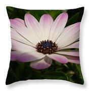 Osteospermum Whiter Shade Of Pale Throw Pillow