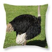 Ostrich 1 Throw Pillow