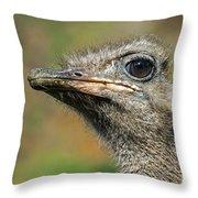 Ostrich 4 Throw Pillow