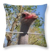 Ostrich Male Close Up Throw Pillow