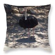 Ostrich Dance Throw Pillow