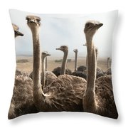 Ostrich Heads Throw Pillow by Johan Swanepoel