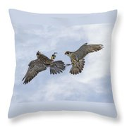 Young Peregrine Falcon And Ma Share In The Air Throw Pillow