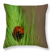 Out For A Snack Throw Pillow