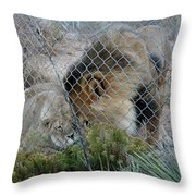 Out Of Africa Lions 4 Throw Pillow