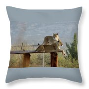 Out Of Africa Lions Throw Pillow