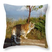 Out Of Africa  Tiger 1 Throw Pillow