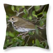 Ovenbird Throw Pillow