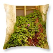 Overgrown Window Of Old Building Throw Pillow