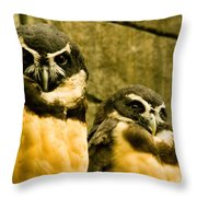 Owl I Throw Pillow