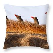 Oxpeckers Throw Pillow