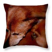 Ozzie Throw Pillow