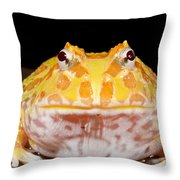 Pac Man Frog Ceratophrys On A Rock Throw Pillow