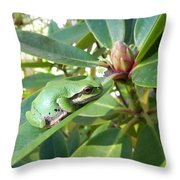 Pacific Chorus Frog On A Rhodo  Throw Pillow