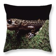 Pacific Giant Salamander On Mossy Rock Throw Pillow