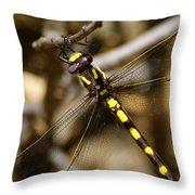 Pacific Spiketail Dragonfly On Mt Tamalpais 2 Throw Pillow