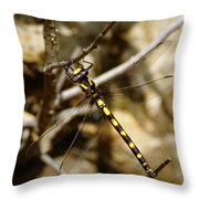 Pacific Spiketail Dragonfly On Mt Tamalpais Throw Pillow