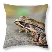 Pacific Tree Frog On A Rock Throw Pillow by David Gn