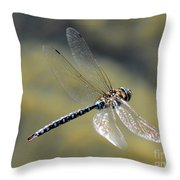 Paddletail Darner In Flight Throw Pillow