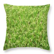Paddy Field Throw Pillow