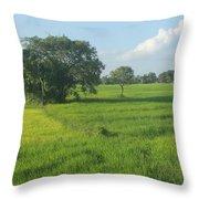 Paddy Fields 2 Throw Pillow