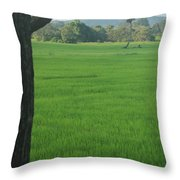 Paddy Fields 3 Throw Pillow