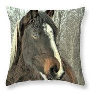 Paint Horse In Winter Throw Pillow
