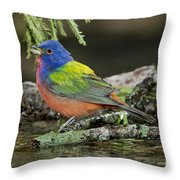 Painted Bunting Drinking Throw Pillow