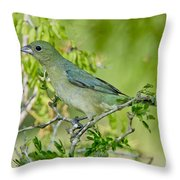 Painted Bunting Hen Throw Pillow