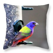 Painted Bunting - Img_9756-004 Throw Pillow