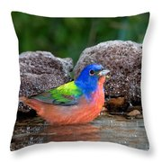 Painted Bunting Passerina Ciris In Water Throw Pillow