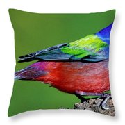 Painted Bunting Passerina Ciris Throw Pillow