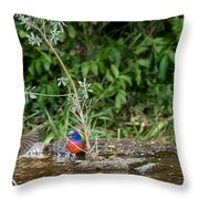 Painted Buntings Bathing Throw Pillow
