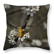 Painted Lady On Wild Plum Throw Pillow