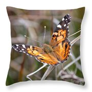 Painted Lady Square Throw Pillow